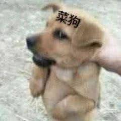 ▲ 菜狗本菜